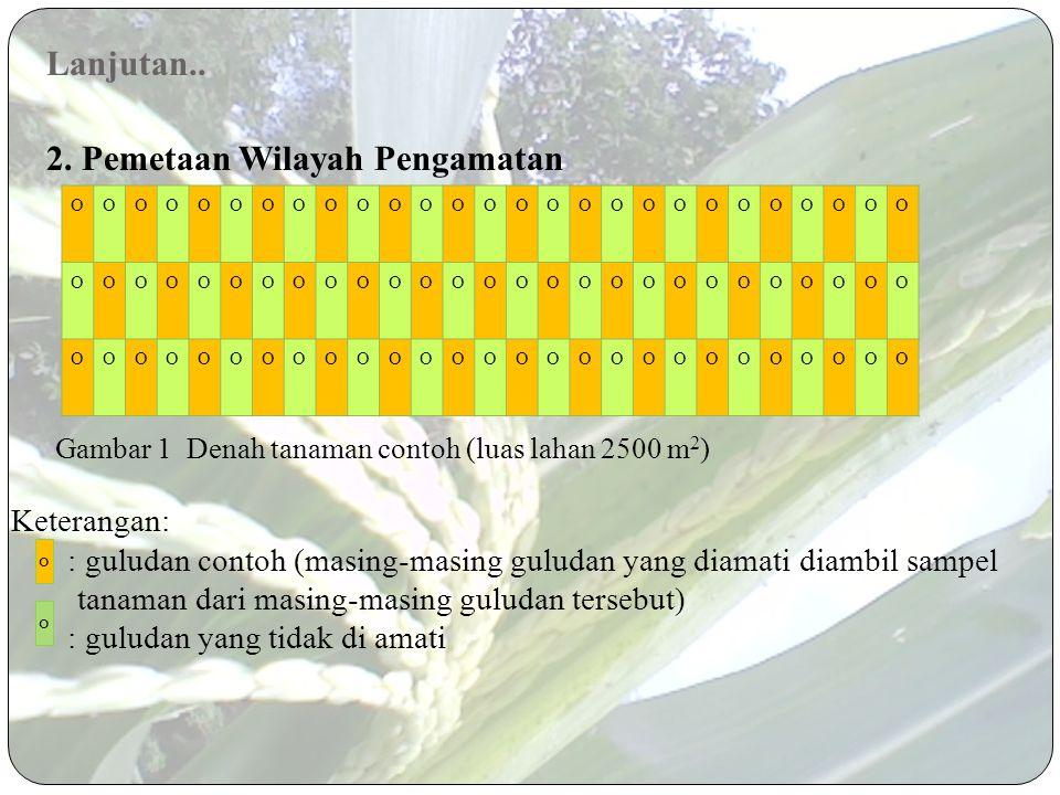 Metode 1. Penarikan Contoh Pada komoditas jagung yang diamati diambil 40 tanaman contoh. Letak tanaman contoh di dalam petak pertanaman ditentukan sec