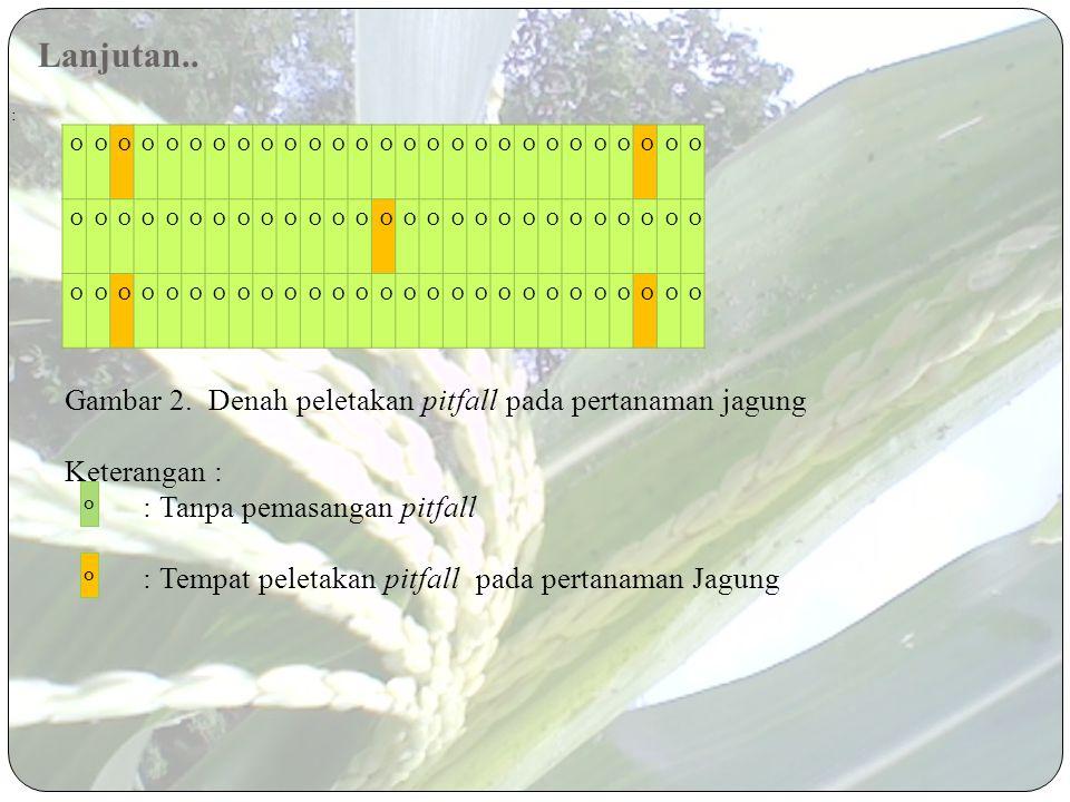 Dimasukkan ke dalam plastik 3. Cara Pengamatan a.Pengamatan langsung pada tajuk tanaman b.Pengamatan menggunakan jaring serangga c.Pengamatan dengan l