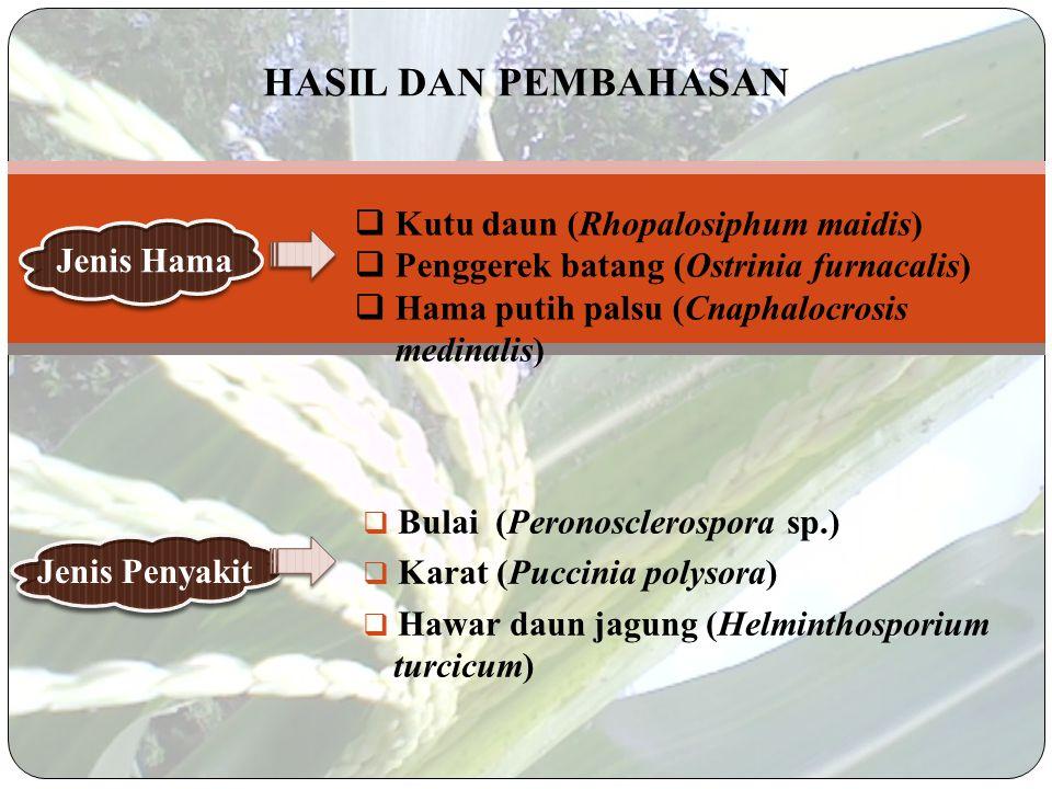 Wawancara  Asal benih yang digunakan untuk ditanam menggunakan benih musim tanam sebelumnya.