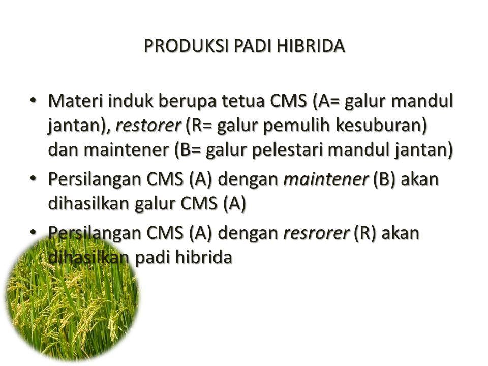 PRODUKSI PADI HIBRIDA Materi induk berupa tetua CMS (A= galur mandul jantan), restorer (R= galur pemulih kesuburan) dan maintener (B= galur pelestari