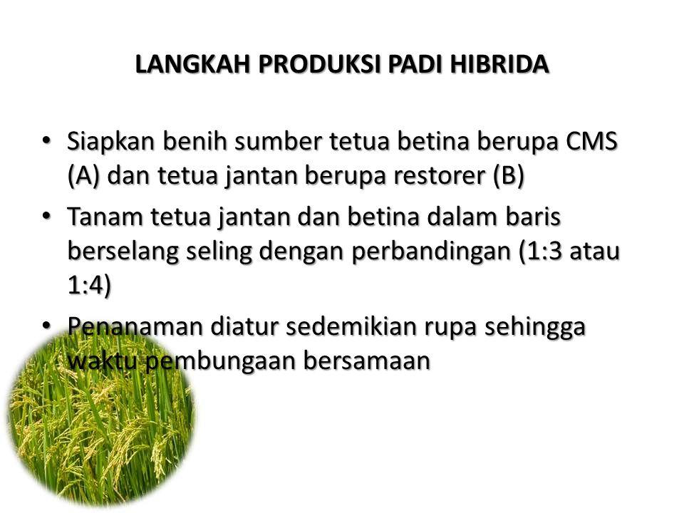 Siapkan benih sumber tetua betina berupa CMS (A) dan tetua jantan berupa restorer (B) Siapkan benih sumber tetua betina berupa CMS (A) dan tetua janta