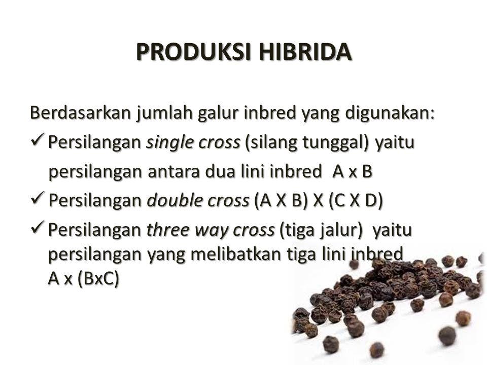 PRODUKSI HIBRIDA Berdasarkan jumlah galur inbred yang digunakan: Persilangan single cross (silang tunggal) yaitu Persilangan single cross (silang tung