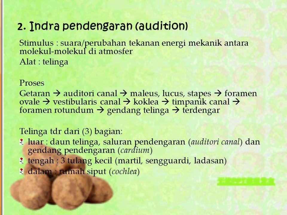 2. Indra pendengaran (audition) Stimulus : suara/perubahan tekanan energi mekanik antara molekul-molekul di atmosfer Alat : telinga Proses Getaran  a