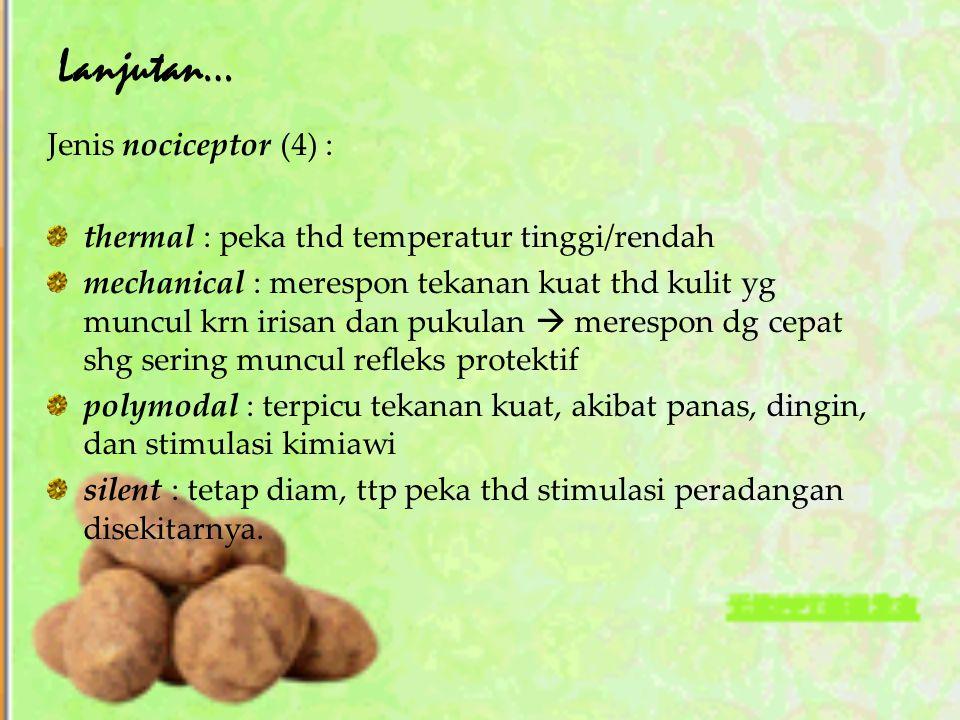 Lanjutan… Jenis nociceptor (4) : thermal : peka thd temperatur tinggi/rendah mechanical : merespon tekanan kuat thd kulit yg muncul krn irisan dan puk