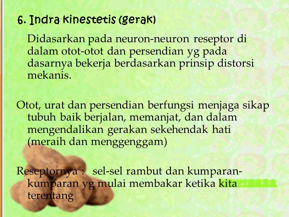 6. Indra kinestetis (gerak) Didasarkan pada neuron-neuron reseptor di dalam otot-otot dan persendian yg pada dasarnya bekerja berdasarkan prinsip dist