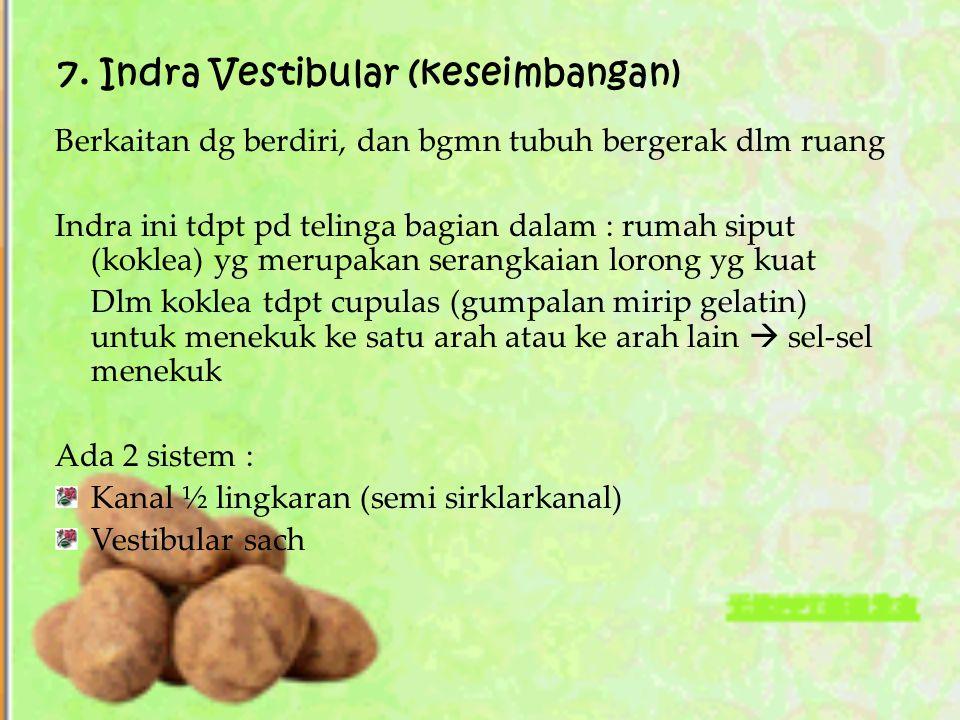 7. Indra Vestibular (keseimbangan) Berkaitan dg berdiri, dan bgmn tubuh bergerak dlm ruang Indra ini tdpt pd telinga bagian dalam : rumah siput (kokle