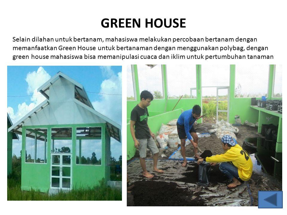 GREEN HOUSE Selain dilahan untuk bertanam, mahasiswa melakukan percobaan bertanam dengan memanfaatkan Green House untuk bertanaman dengan menggunakan polybag, dengan green house mahasiswa bisa memanipulasi cuaca dan iklim untuk pertumbuhan tanaman
