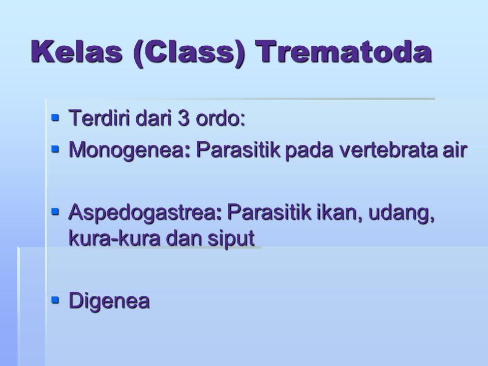 Kelas (Class) Trematoda  Terdiri dari 3 ordo:  Monogenea: Parasitik pada vertebrata air  Aspedogastrea: Parasitik ikan, udang, kura-kura dan siput