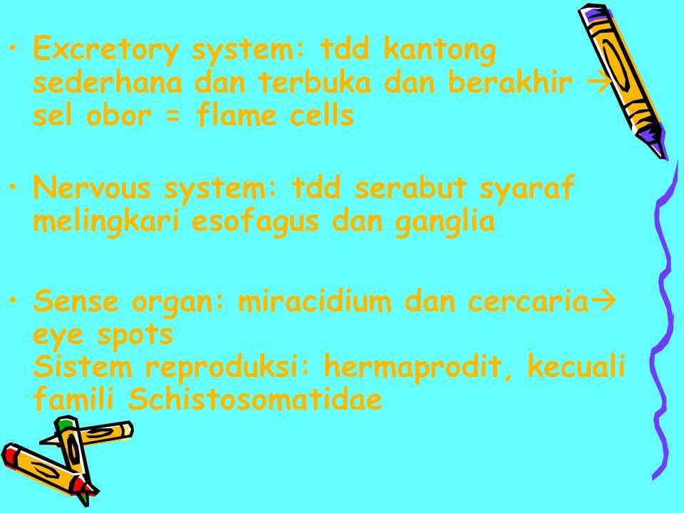 Excretory system: tdd kantong sederhana dan terbuka dan berakhir  sel obor = flame cells Nervous system: tdd serabut syaraf melingkari esofagus dan g