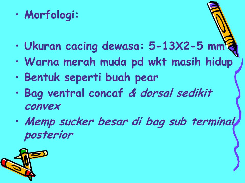 Morfologi: Ukuran cacing dewasa: 5-13X2-5 mm Warna merah muda pd wkt masih hidup Bentuk seperti buah pear Bag ventral concaf & dorsal sedikit convex M
