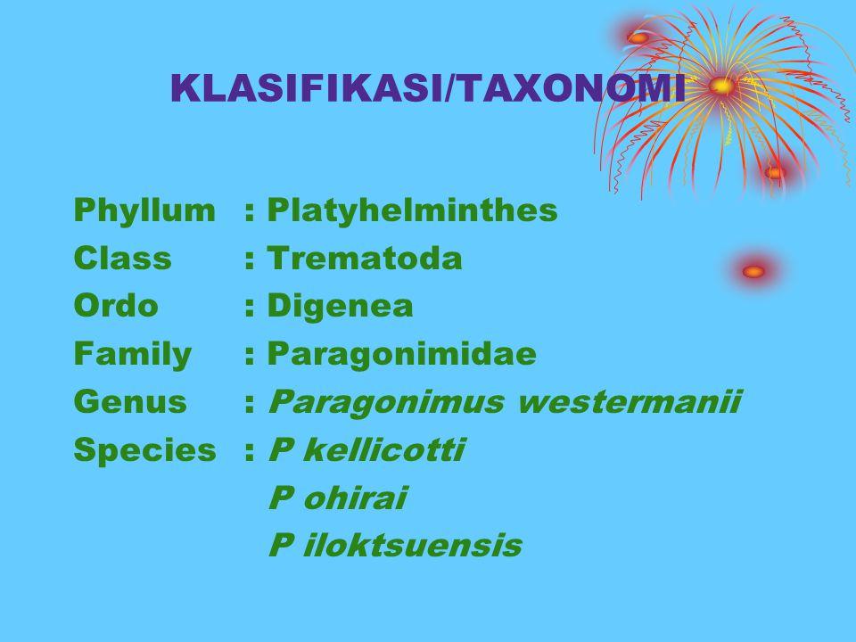 KLASIFIKASI/TAXONOMI Phyllum: Platyhelminthes Class: Trematoda Ordo: Digenea Family: Paragonimidae Genus : Paragonimus westermanii Species: P kellicot