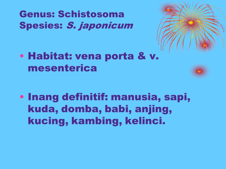 Genus: Schistosoma Spesies: S. japonicum Habitat: vena porta & v. mesenterica Inang definitif: manusia, sapi, kuda, domba, babi, anjing, kucing, kambi