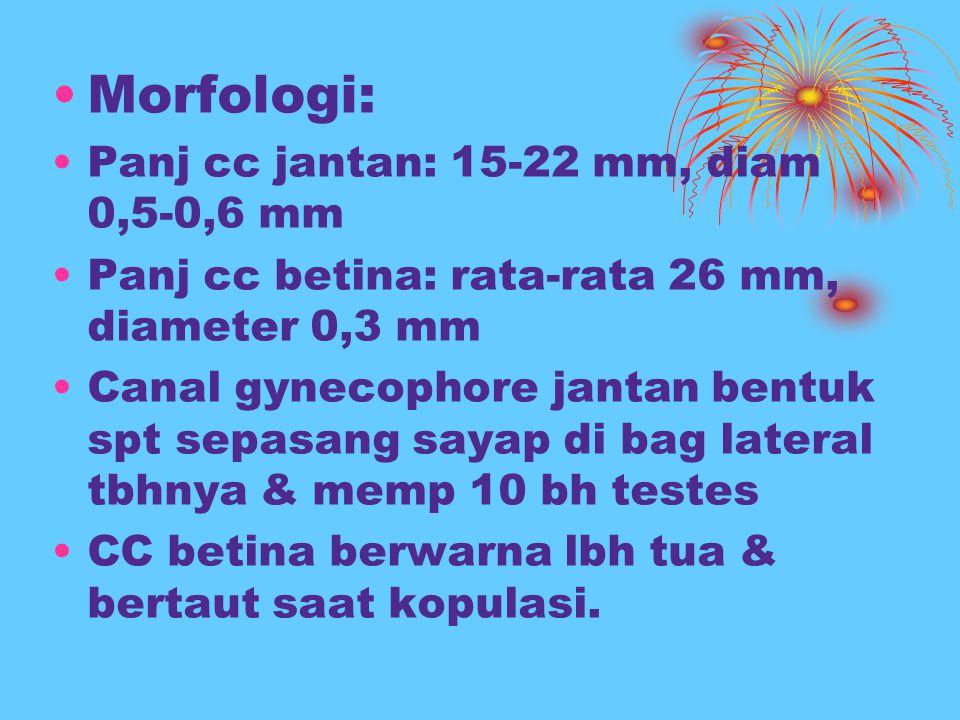 Morfologi: Panj cc jantan: 15-22 mm, diam 0,5-0,6 mm Panj cc betina: rata-rata 26 mm, diameter 0,3 mm Canal gynecophore jantan bentuk spt sepasang say