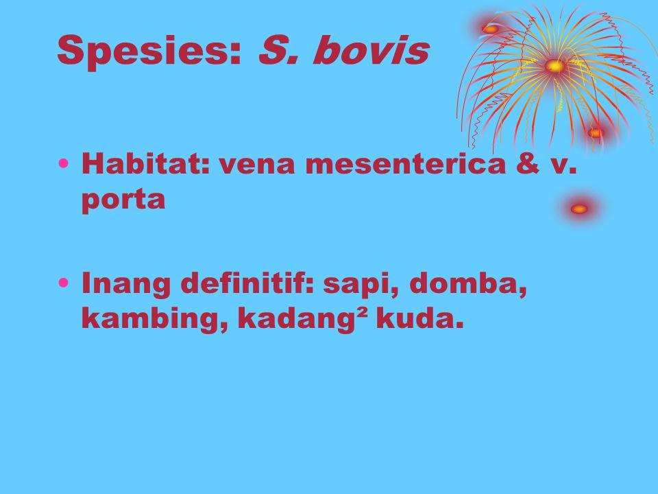 Spesies: S. bovis Habitat: vena mesenterica & v. porta Inang definitif: sapi, domba, kambing, kadang² kuda.
