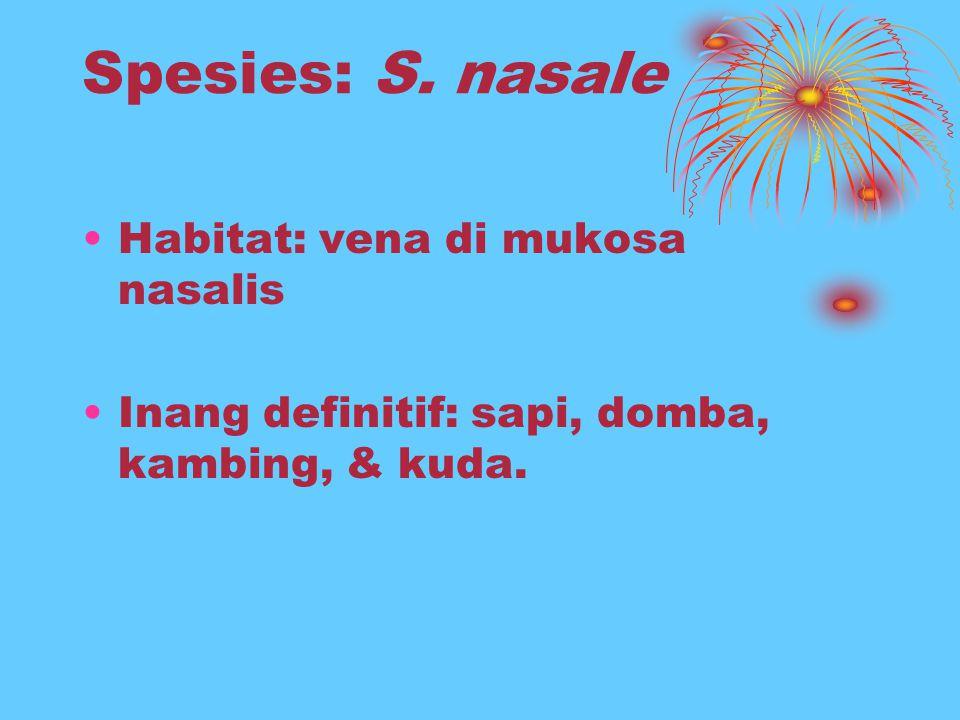 Spesies: S. nasale Habitat: vena di mukosa nasalis Inang definitif: sapi, domba, kambing, & kuda.