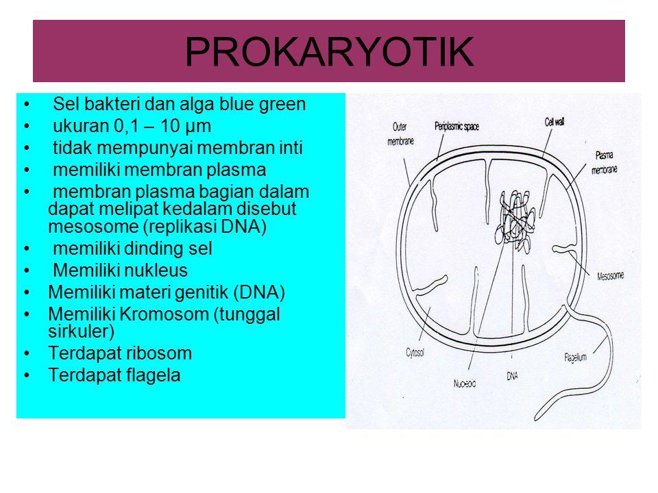 PROKARYOTIK Sel bakteri dan alga blue green ukuran 0,1 – 10 µm tidak mempunyai membran inti memiliki membran plasma membran plasma bagian dalam dapat