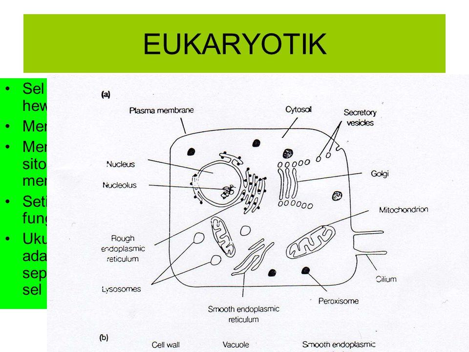 EUKARYOTIK Sel terdapat pada hewan,tumbuhan dan manusia Memiliki membran inti Memiliki banyak organel dalam sitosol, dan setiap organel mempunyai memb