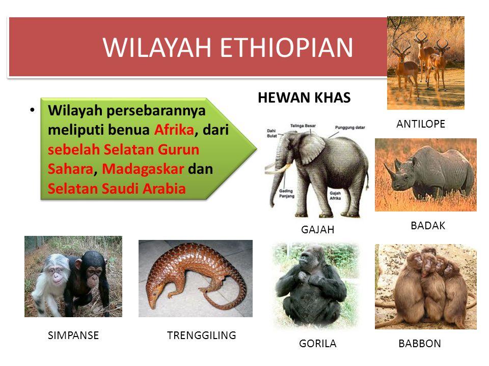 WILAYAH ETHIOPIAN Wilayah persebarannya meliputi benua Afrika, dari sebelah Selatan Gurun Sahara, Madagaskar dan Selatan Saudi Arabia HEWAN KHAS GAJAH