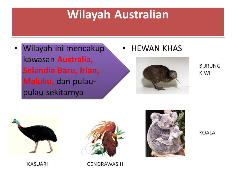 Wilayah Australian Wilayah ini mencakup kawasan Australia, Selandia Baru, Irian, Maluku, dan pulau- pulau sekitarnya HEWAN KHAS BURUNG KIWI KOALA KASU