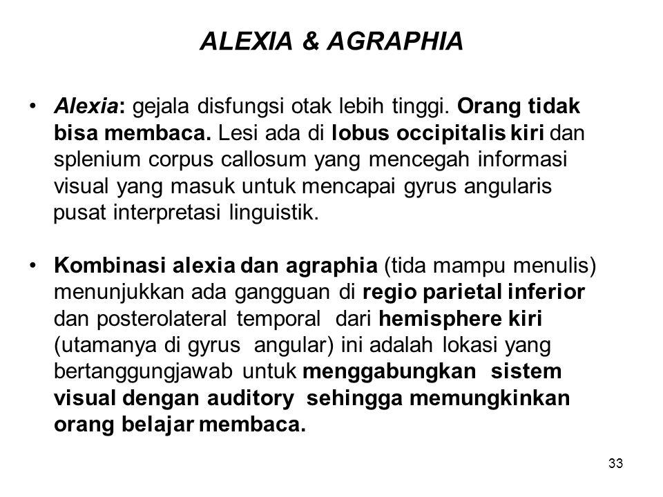 33 ALEXIA & AGRAPHIA Alexia: gejala disfungsi otak lebih tinggi. Orang tidak bisa membaca. Lesi ada di lobus occipitalis kiri dan splenium corpus call