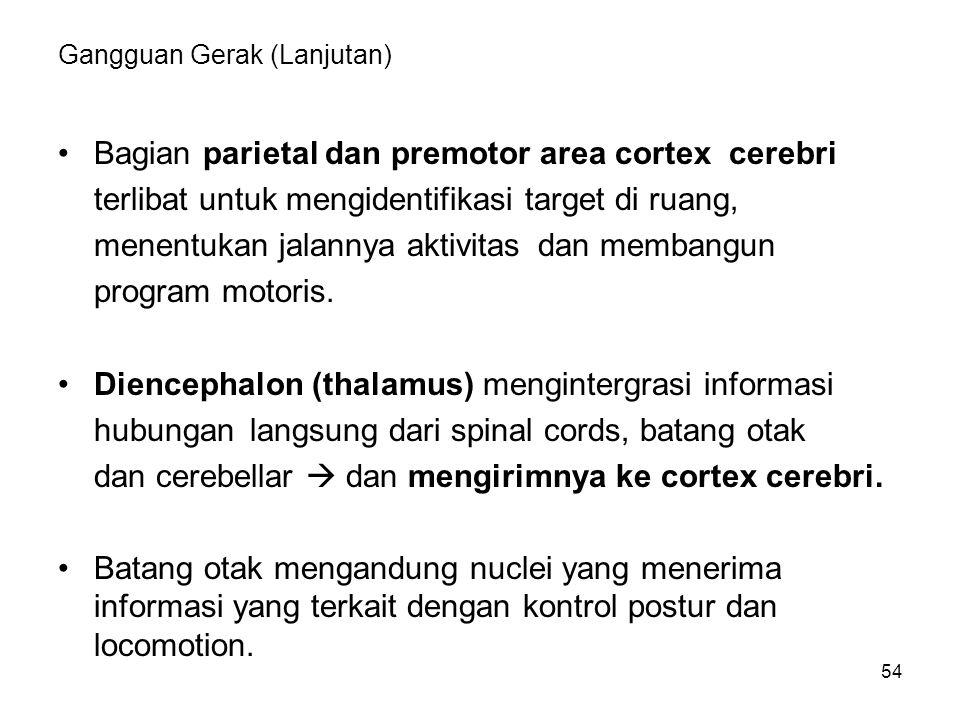 54 Gangguan Gerak (Lanjutan) Bagian parietal dan premotor area cortex cerebri terlibat untuk mengidentifikasi target di ruang, menentukan jalannya akt