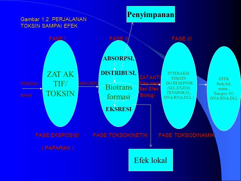 POKOK2 BAHASAN TI Gambar 1.2 PERJALANAN TOKSIN SAMPAI EFEK FASE I FASE II FASE III ZAT AKTIF PENGGU- ABSORPSI Siap mem Beri Efek NAAN Biologi FASE EKSPOSISI FASE TOKSOKINETIK FASE TOKSODINAMIK ( PAPARAN ) POKOK2 BAHASAN TI Gambar 1.2 PERJALANAN TOKSIN SAMPAI EFEK FASE I FASE II FASE III ZAT AKTIF PENGGU- ABSORPSI Siap mem Beri Efek NAAN Biologi FASE EKSPOSISI FASE TOKSOKINETIK FASE TOKSODINAMIK ( PAPARAN ) ZAT AK TIF/ TOKSIN ABSORPSI, DISTRIBUSI, EKSRESI INTERAKSI TOKSIN DG RESEPTOR (SEL,ENZIM, TRNSPOR O 2, DNA/RNA,DLL.) EFEK Pada Sel, enzim., Transpor O2, DNA/RNA,DLL Penyimpanan Biotrans formasi Efek lokal