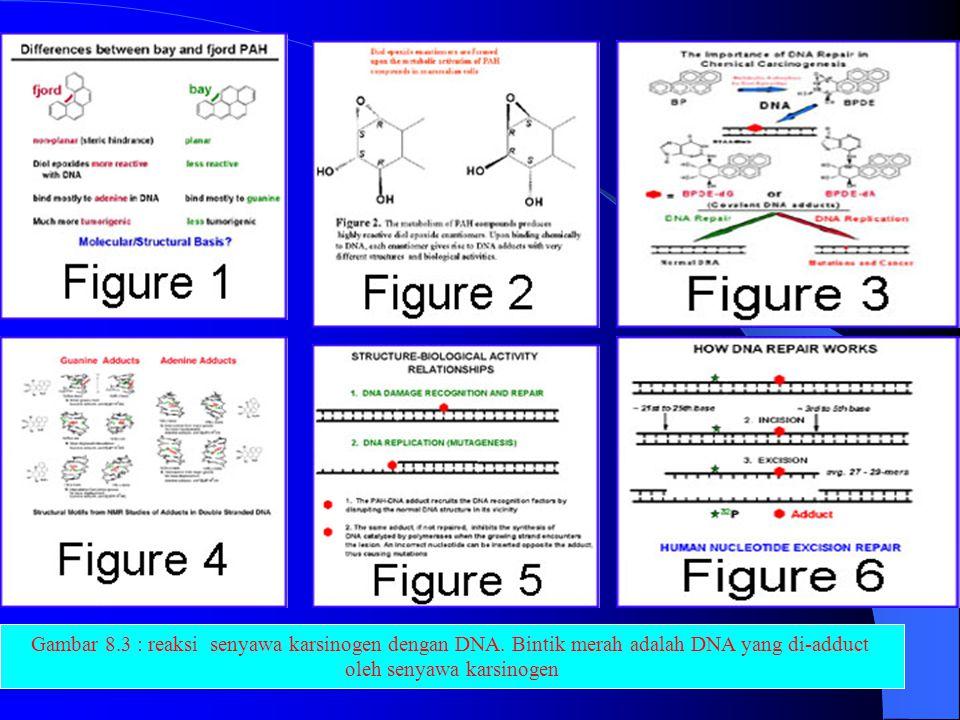 Sumber : Info@harunyahya.com Gambar 8.1 Inti sel Sumber : www.uh.edu Sumber : www.uh.edu Inti Sel dan DNA Gambar 8.2 : Rantai DNA