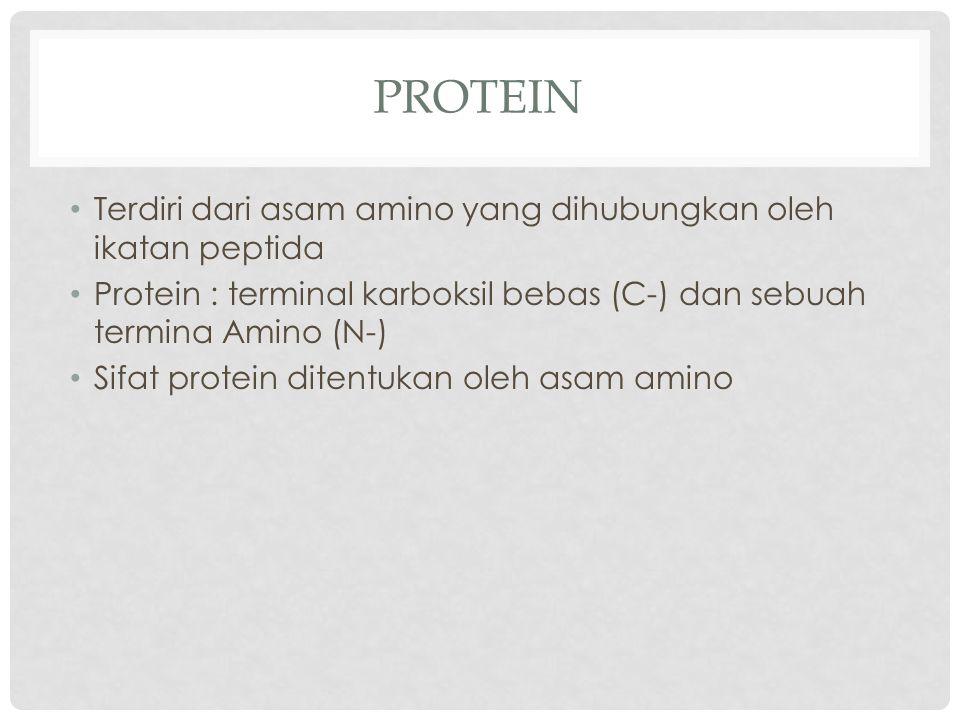 PROTEIN Terdiri dari asam amino yang dihubungkan oleh ikatan peptida Protein : terminal karboksil bebas (C-) dan sebuah termina Amino (N-) Sifat prote