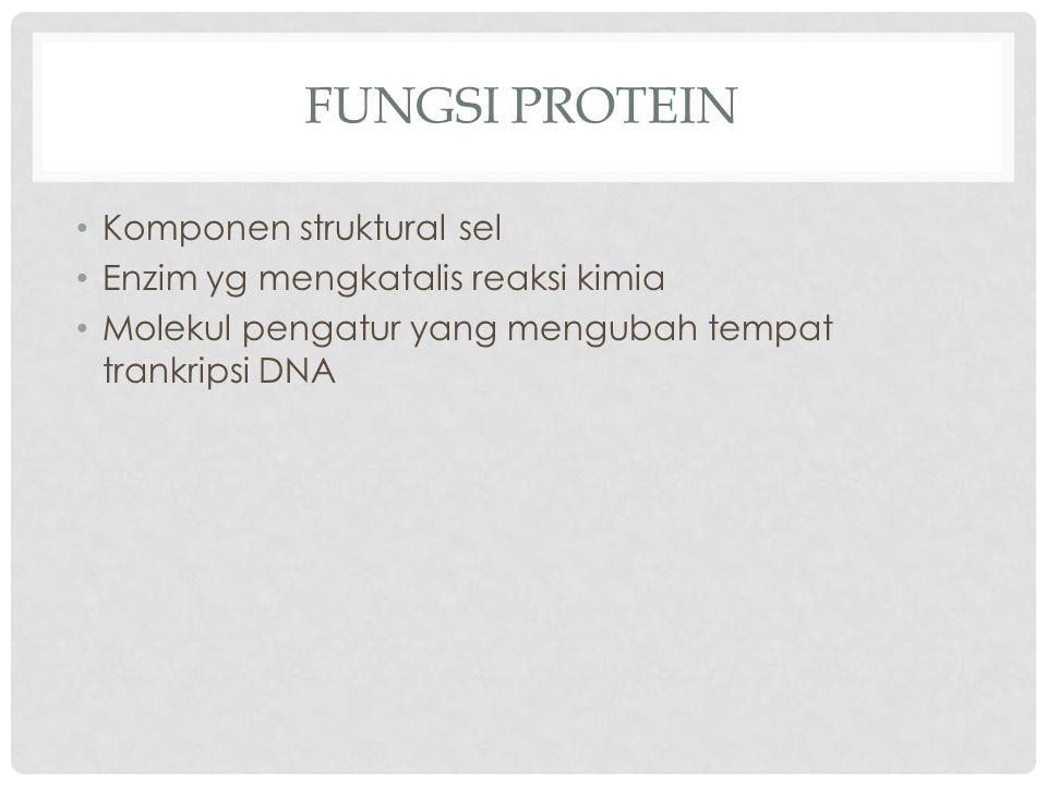FUNGSI PROTEIN Komponen struktural sel Enzim yg mengkatalis reaksi kimia Molekul pengatur yang mengubah tempat trankripsi DNA