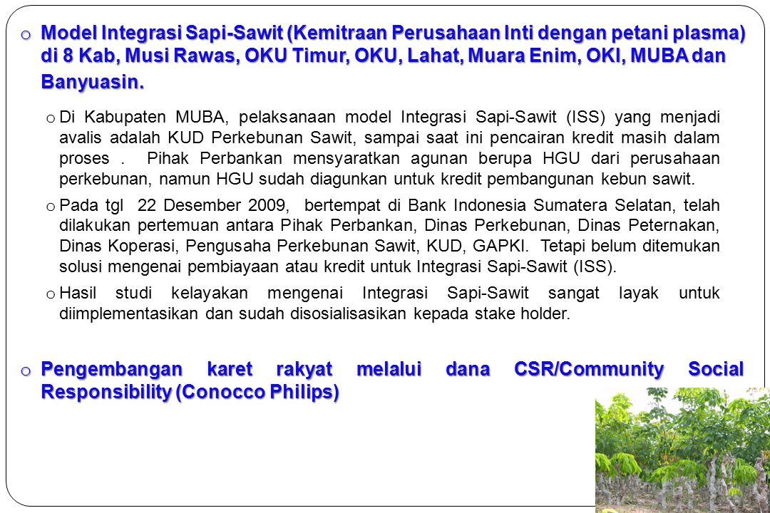 o Pengembangan karet rakyat melalui dana CSR/Community Social Responsibility (Conocco Philips) o Model Integrasi Sapi-Sawit (Kemitraan Perusahaan Inti