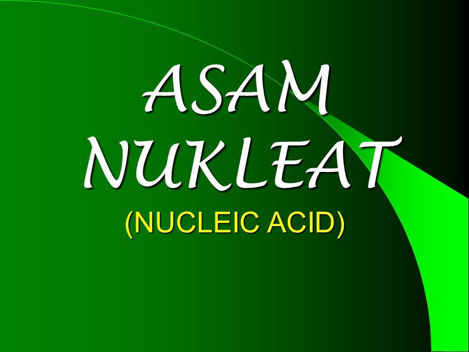 ASAM NUKLEAT (NUCLEIC ACID)