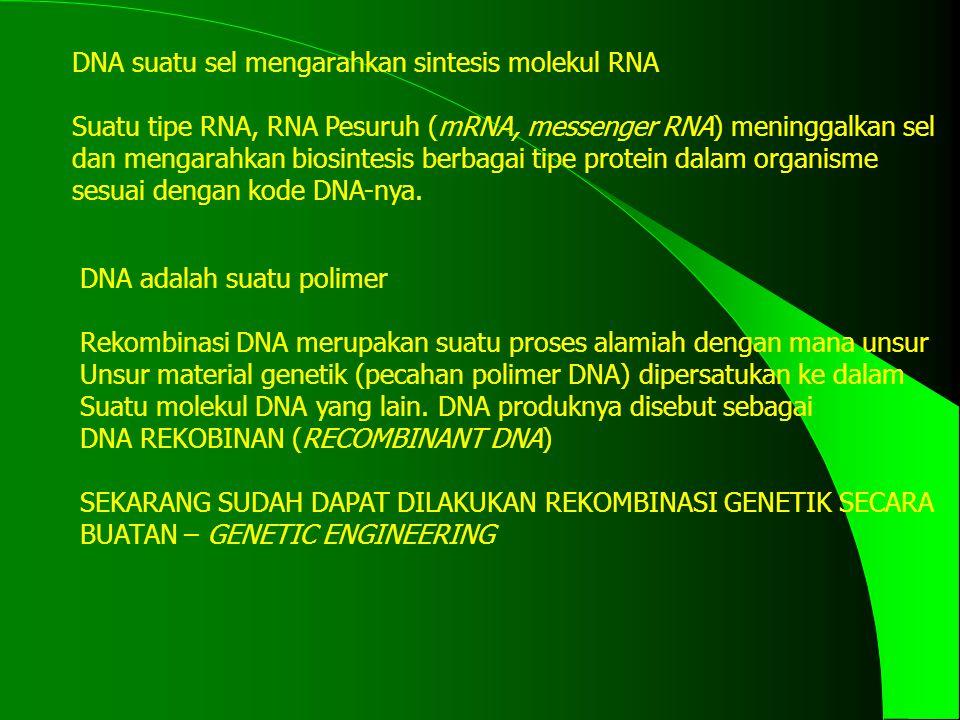 DNA suatu sel mengarahkan sintesis molekul RNA Suatu tipe RNA, RNA Pesuruh (mRNA, messenger RNA) meninggalkan sel dan mengarahkan biosintesis berbagai tipe protein dalam organisme sesuai dengan kode DNA-nya.