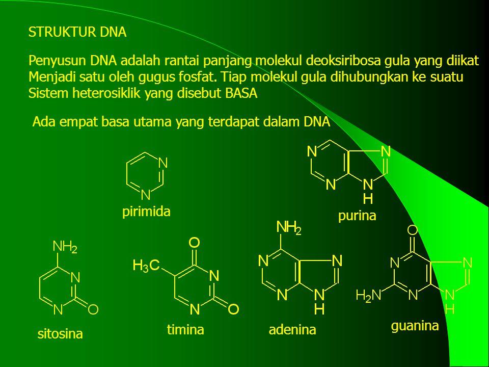 STRUKTUR DNA Penyusun DNA adalah rantai panjang molekul deoksiribosa gula yang diikat Menjadi satu oleh gugus fosfat.