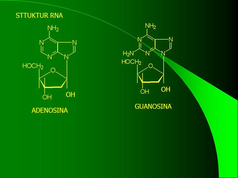 STTUKTUR RNA OH ADENOSINA OH GUANOSINA