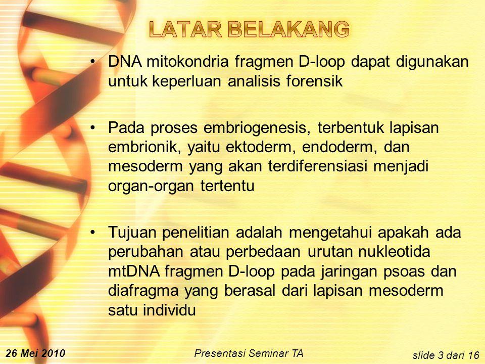 DNA mitokondria fragmen D-loop dapat digunakan untuk keperluan analisis forensik Pada proses embriogenesis, terbentuk lapisan embrionik, yaitu ektoderm, endoderm, dan mesoderm yang akan terdiferensiasi menjadi organ-organ tertentu Tujuan penelitian adalah mengetahui apakah ada perubahan atau perbedaan urutan nukleotida mtDNA fragmen D-loop pada jaringan psoas dan diafragma yang berasal dari lapisan mesoderm satu individu slide 3 dari 16 26 Mei 2010 Presentasi Seminar TA