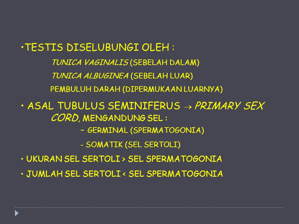 TESTIS DISELUBUNGI OLEH : TUNICA VAGINALIS (SEBELAH DALAM) TUNICA ALBUGINEA (SEBELAH LUAR) PEMBULUH DARAH (DIPERMUKAAN LUARNYA) ASAL TUBULUS SEMINIFER