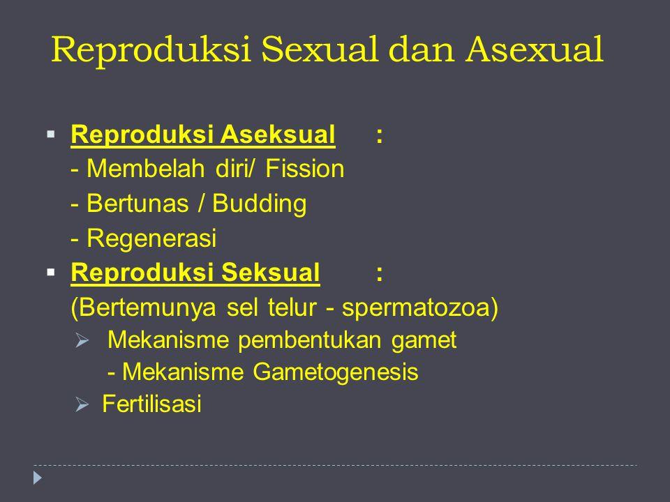 Reproduksi Sexual dan Asexual  Reproduksi Aseksual: - Membelah diri/ Fission - Bertunas / Budding - Regenerasi  Reproduksi Seksual: (Bertemunya sel