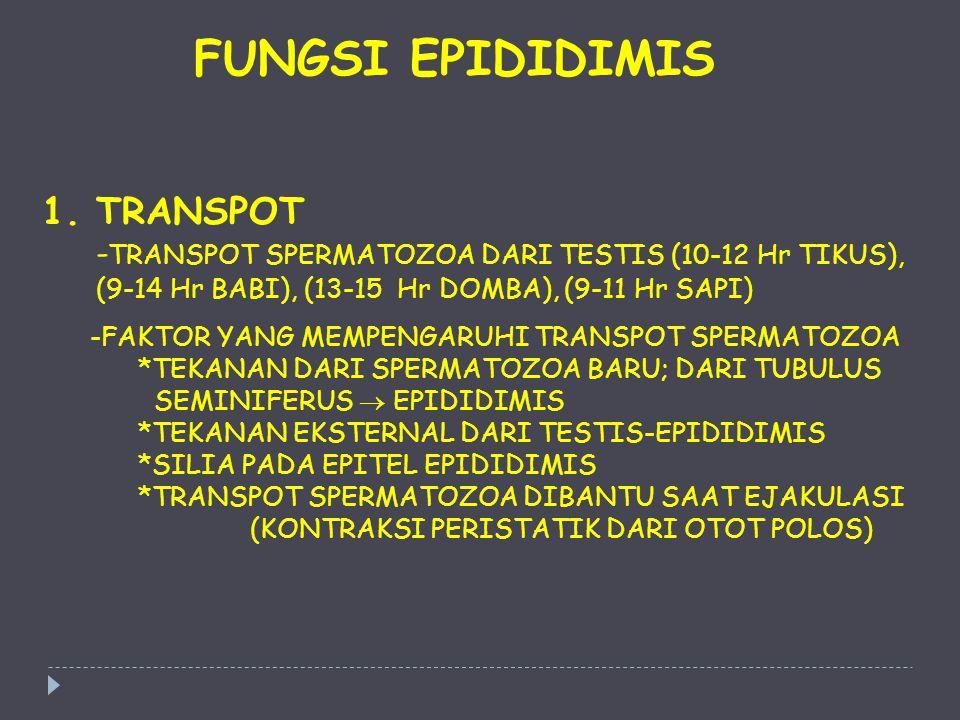1.TRANSPOT - TRANSPOT SPERMATOZOA DARI TESTIS (10-12 Hr TIKUS), (9-14 Hr BABI), (13-15 Hr DOMBA), (9-11 Hr SAPI) -FAKTOR YANG MEMPENGARUHI TRANSPOT SP