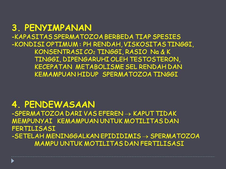 3. PENYIMPANAN -KAPASITAS SPERMATOZOA BERBEDA TIAP SPESIES -KONDISI OPTIMUM : PH RENDAH, VISKOSITAS TINGGI, KONSENTRASI CO 2 TINGGI, RASIO Na & K TING