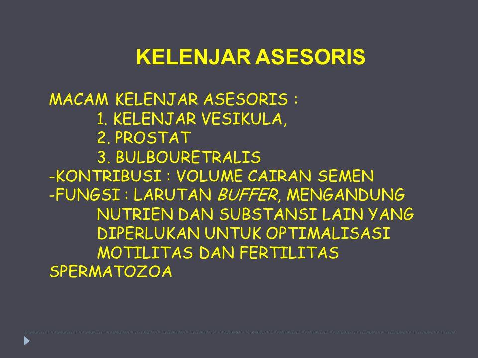 MACAM KELENJAR ASESORIS : 1. KELENJAR VESIKULA, 2. PROSTAT 3. BULBOURETRALIS -KONTRIBUSI : VOLUME CAIRAN SEMEN -FUNGSI : LARUTAN BUFFER, MENGANDUNG NU