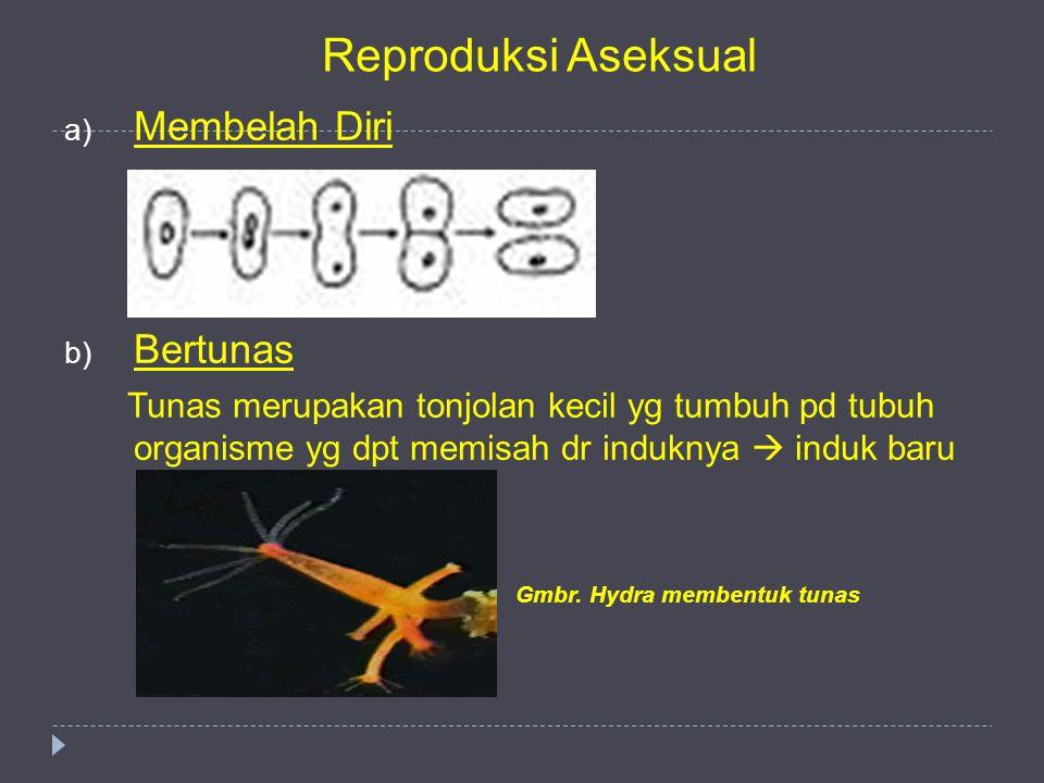 Reproduksi Aseksual a) Membelah Diri b) Bertunas Tunas merupakan tonjolan kecil yg tumbuh pd tubuh organisme yg dpt memisah dr induknya  induk baru G