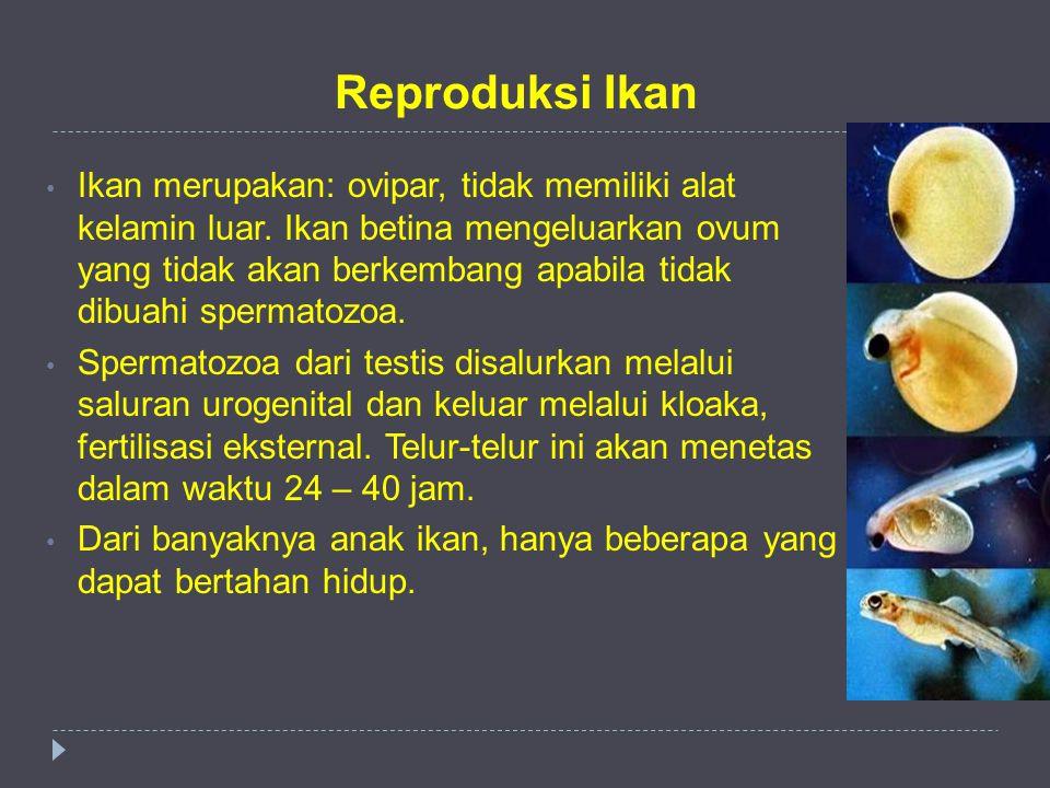 Reproduksi Ikan Ikan merupakan: ovipar, tidak memiliki alat kelamin luar. Ikan betina mengeluarkan ovum yang tidak akan berkembang apabila tidak dibua