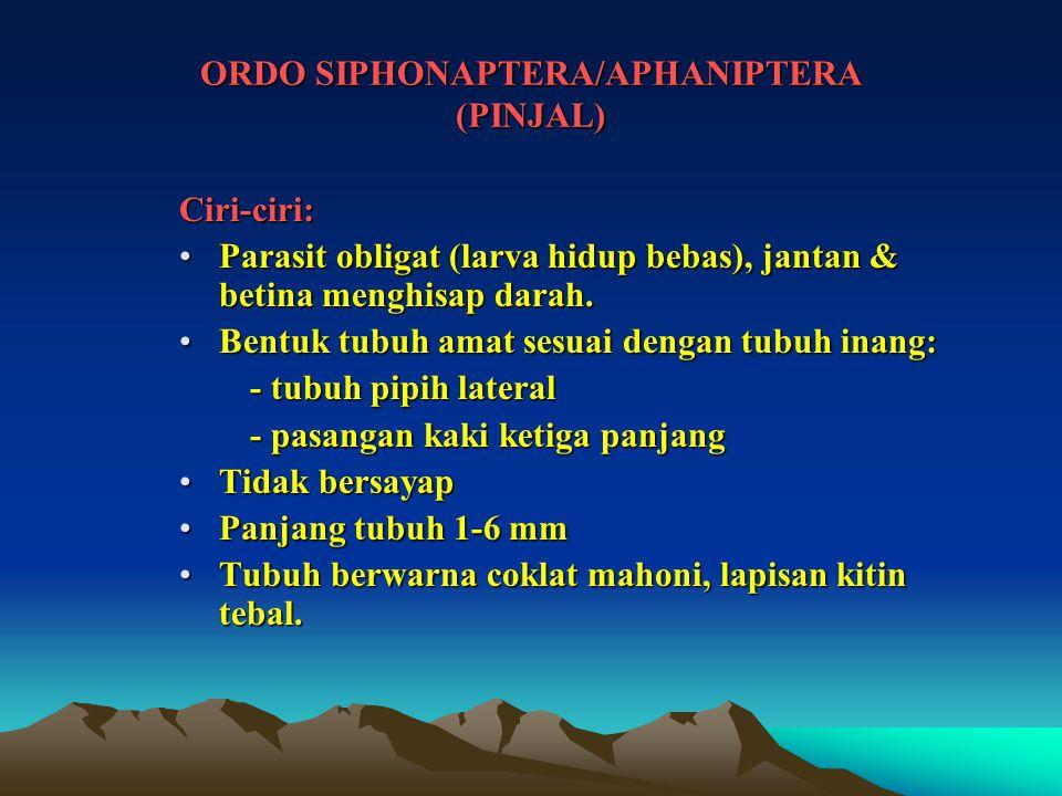 ORDO SIPHONAPTERA/APHANIPTERA (PINJAL) Ciri-ciri: Parasit obligat (larva hidup bebas), jantan & betina menghisap darah.Parasit obligat (larva hidup be