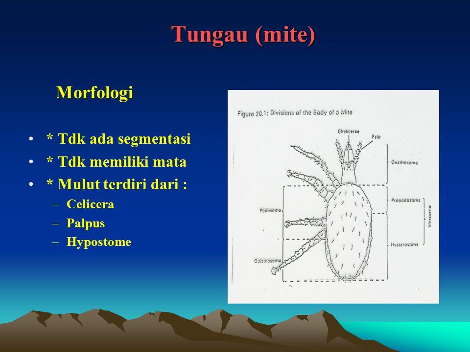 Tungau (mite) Morfologi * Tdk ada segmentasi * Tdk memiliki mata * Mulut terdiri dari : –Celicera –Palpus –Hypostome