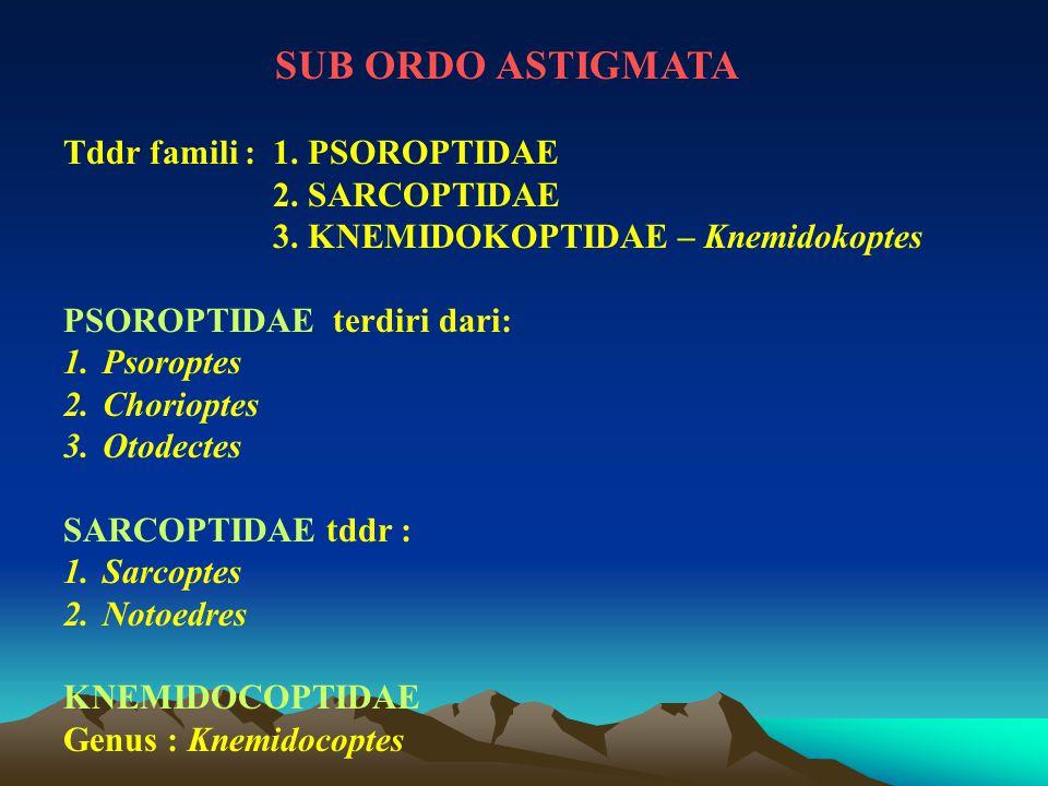 SUB ORDO ASTIGMATA Tddr famili : 1. PSOROPTIDAE 2. SARCOPTIDAE 3. KNEMIDOKOPTIDAE – Knemidokoptes PSOROPTIDAE terdiri dari: 1.Psoroptes 2.Chorioptes 3