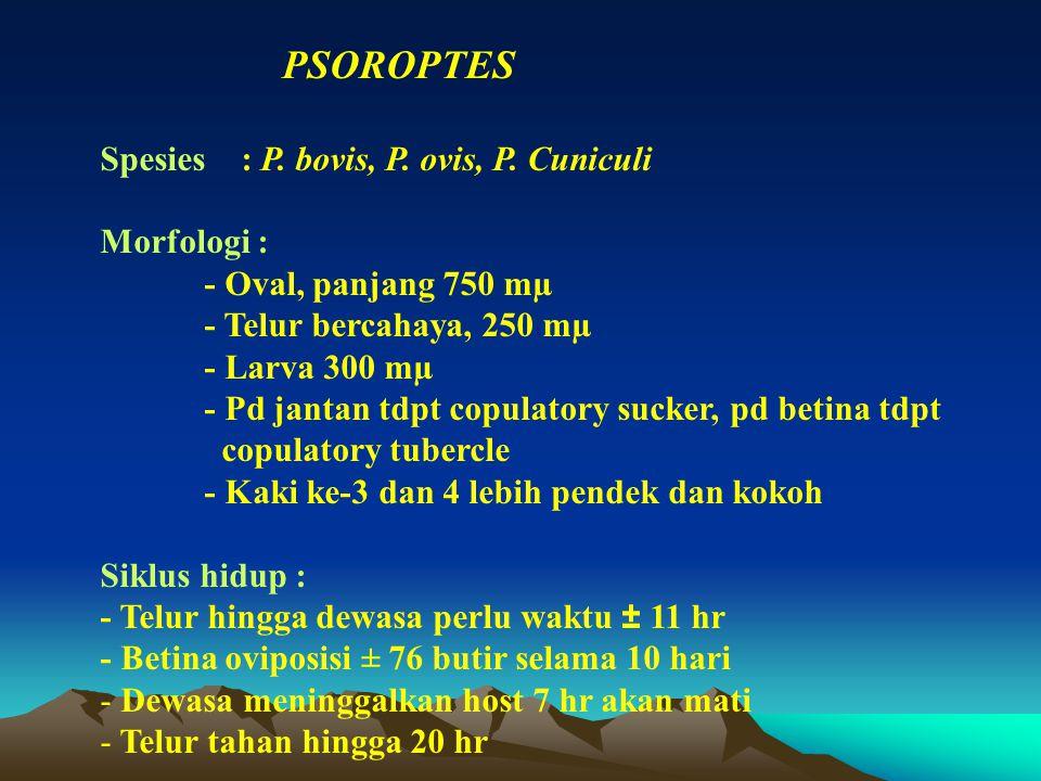 PSOROPTES Spesies : P. bovis, P. ovis, P. Cuniculi Morfologi : - Oval, panjang 750 mµ - Telur bercahaya, 250 mµ - Larva 300 mµ - Pd jantan tdpt copula