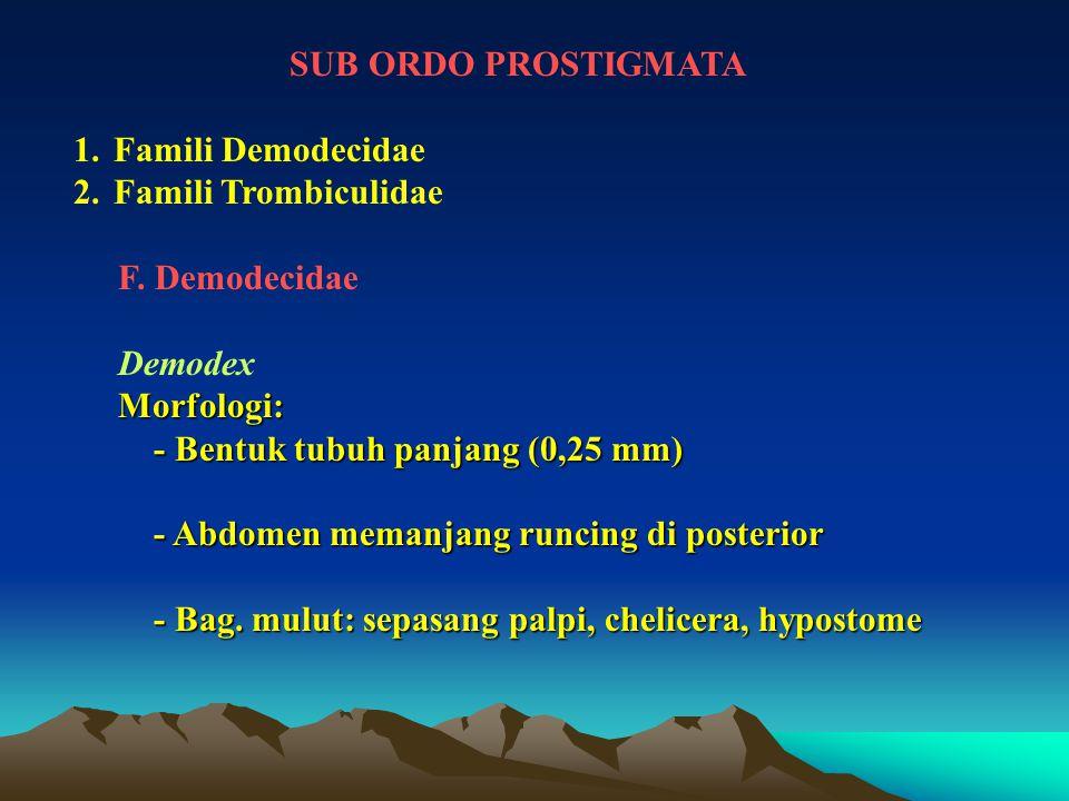 SUB ORDO PROSTIGMATA 1.Famili Demodecidae 2.Famili Trombiculidae F. Demodecidae DemodexMorfologi: - Bentuk tubuh panjang (0,25 mm) - Bentuk tubuh panj