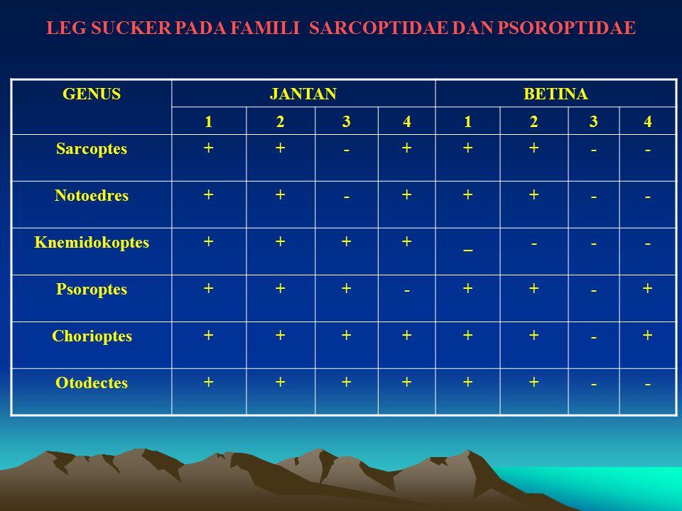 LEG SUCKER PADA FAMILI SARCOPTIDAE DAN PSOROPTIDAE GENUSJANTANBETINA 12341234 Sarcoptes++-+++-- Notoedres++-+++-- Knemidokoptes++++_--- Psoroptes+++-+