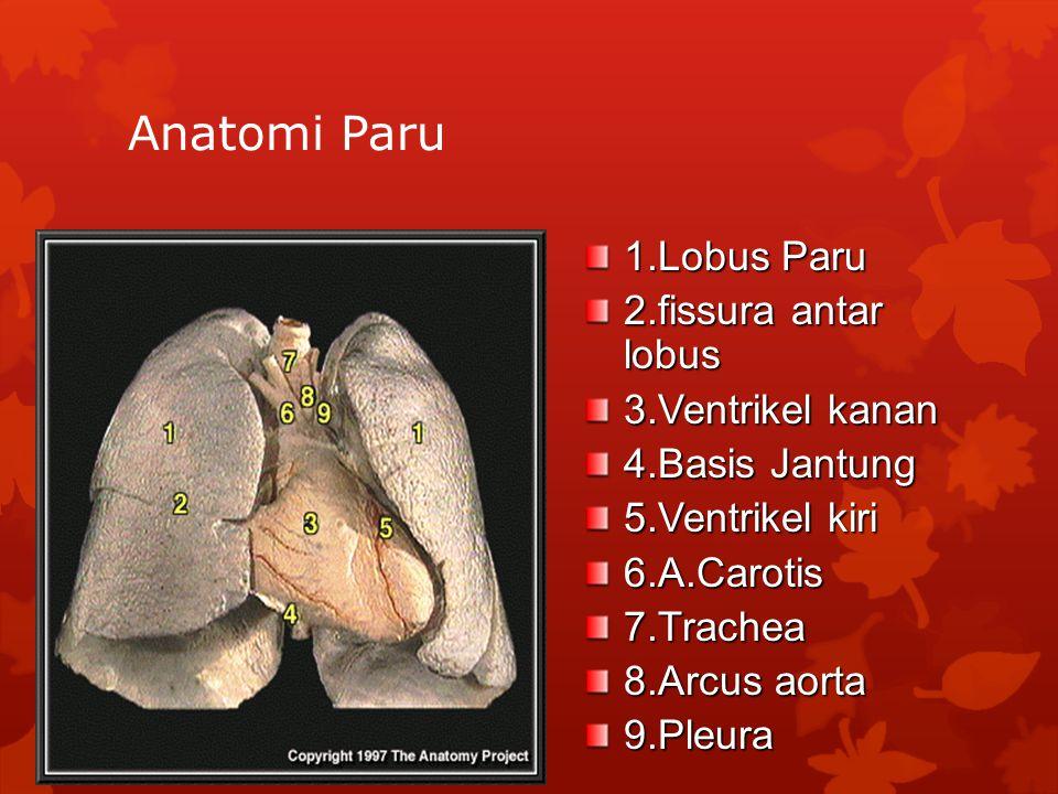 Anatomi Paru 1.Lobus Paru 2.fissura antar lobus 3.Ventrikel kanan 4.Basis Jantung 5.Ventrikel kiri 6.A.Carotis7.Trachea 8.Arcus aorta 9.Pleura