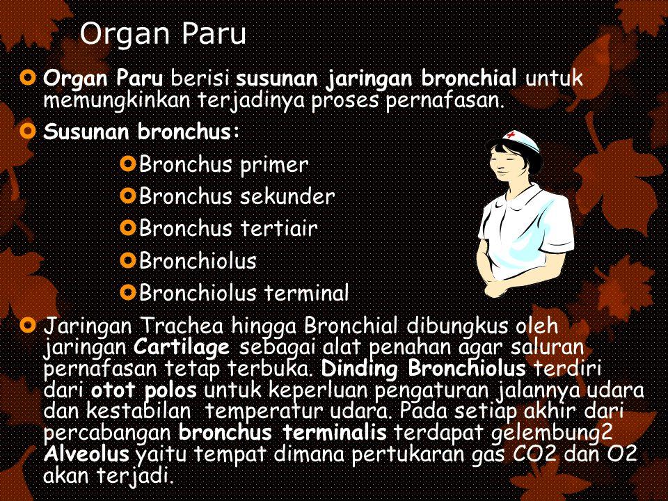 Organ Paru  Organ Paru berisi susunan jaringan bronchial untuk memungkinkan terjadinya proses pernafasan.  Susunan bronchus:  Bronchus primer  Bro